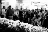 Claudia Rolando - La Sagra dell'Uva di Marino riesce ad unire i più giovani e i più anziani in una grande festa che non conosce età
